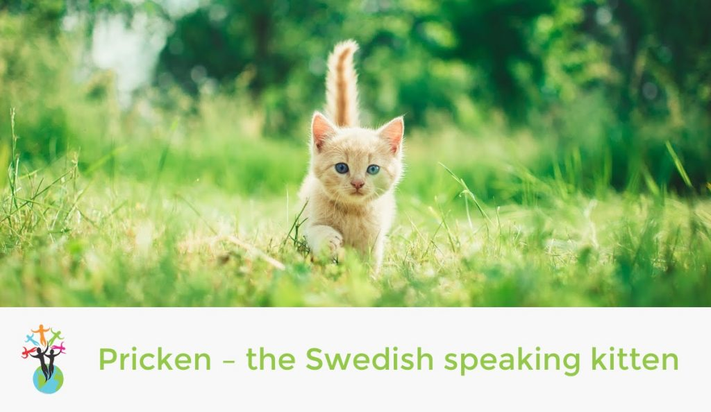 Pricken – the Swedish speaking kitten